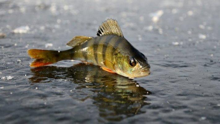 На первый лед с ProОтдых. Конкурс на лучшую весть о рыбалке по перволедью