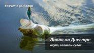 Рыбалка на реке Днестр. Окунь, голавль, судак.