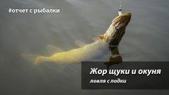 Жор щуки и окуня  Ловля с лодки