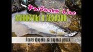 Рыбалка Live. Каникулы в Абхазии. Ловля форели на горных реках