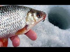 ЛОВЛЯ ПЛОТВЫ  . Рыбалка на палочку.
