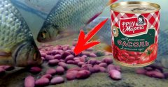 Странная реакция рыбы на КРАСНУЮ фасоль. Подавится но съест