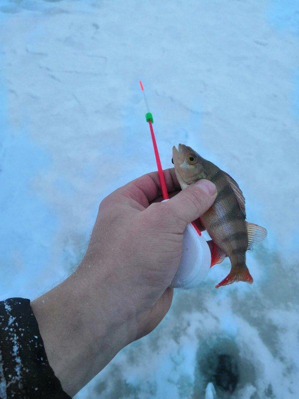 Первая в жизни зимняя рыбалка