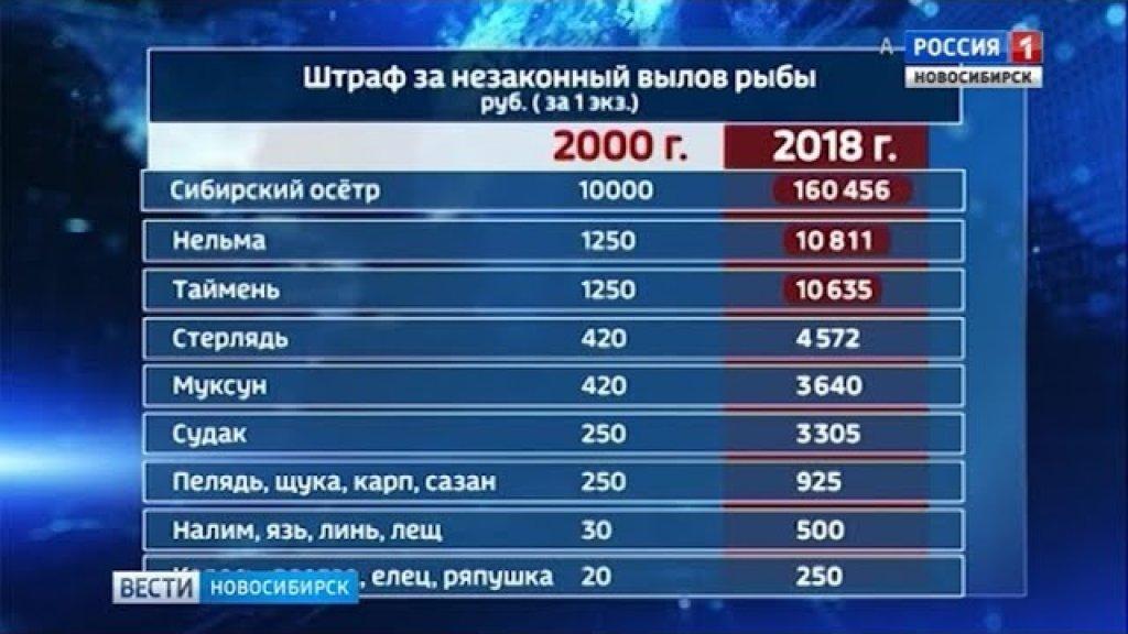 Правительство России в разы повысило штрафы за незаконную рыбалку
