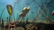 Как рыба реагирует на опарыша и мотыля?