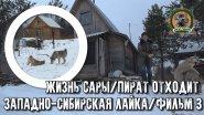 Жизнь Сары/Западно-сибирская лайка/Фильм3/Пират отходит