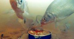 Как рыба реагирует на пиво... Этот рыбак безумец!