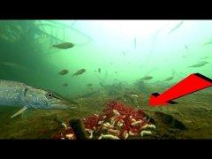 Мотыль и Опарыш НЕ РАБОТАЮТ! Подводная съемка