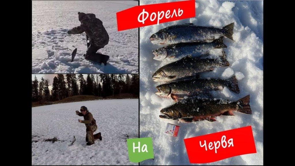 Форелевая рыбалка 2018, продолжаем осваивать новый водоем