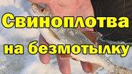 ЛУЧШАЯ БЕЗМОТЫЛКА .на плотву. Свиноплотва атакует. Зимняя рыбалка