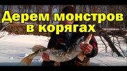 ЖЕСТЬ.ЩУКА ЧУТЬ НЕ ОТКУСИЛА РУКУ. Рыбалка на раттлин  в корягах. Трофейные окуни и щуки со льда.