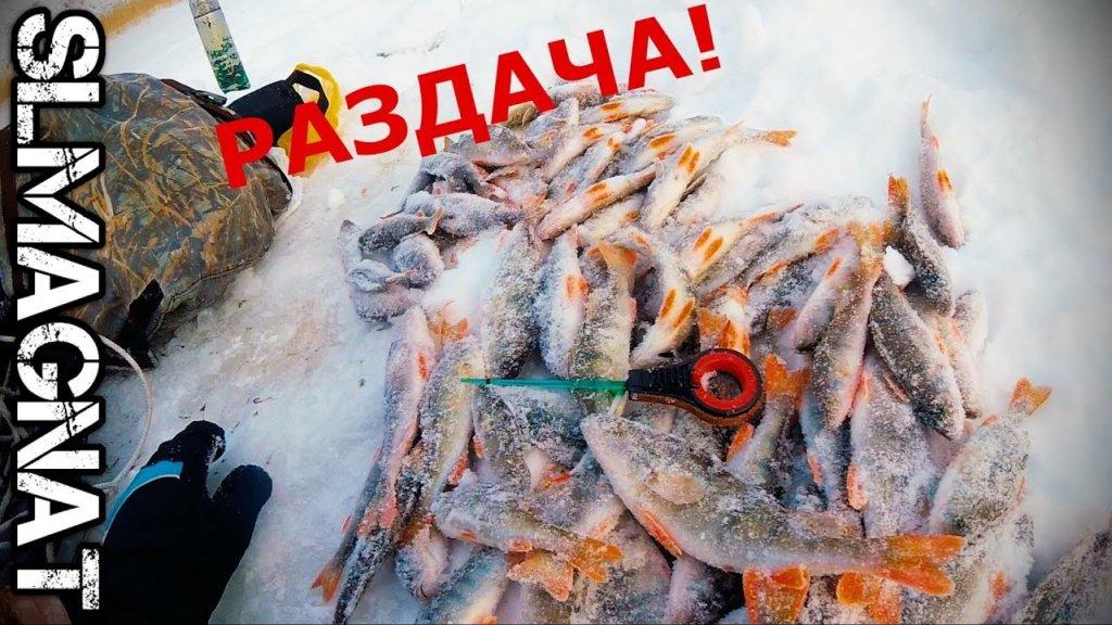 Вот это рыбалка! Ловля ОКУНЯ на МЕЛКОВОДЬЕ зимой.Бешеный клёв окуня на мормышку[SLMagnat]