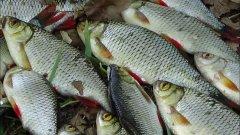 Рыбалка на пробку , секреты рыболова
