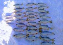 Рыбалка в -30