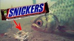 Реакция рыбы на Сникерс. И что теперь? Скупать все шоколадки?