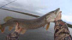 Рыбалка на щуку. Fishing trolling. Big pike. Мasquinongy.