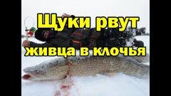 Только ЭТОТ ЖИВЕЦ. свел ЩУК с ума.Зимняя  рыбалка в декабре.
