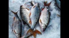 Зимняя ловля плотвы . Ловля на поплавок.