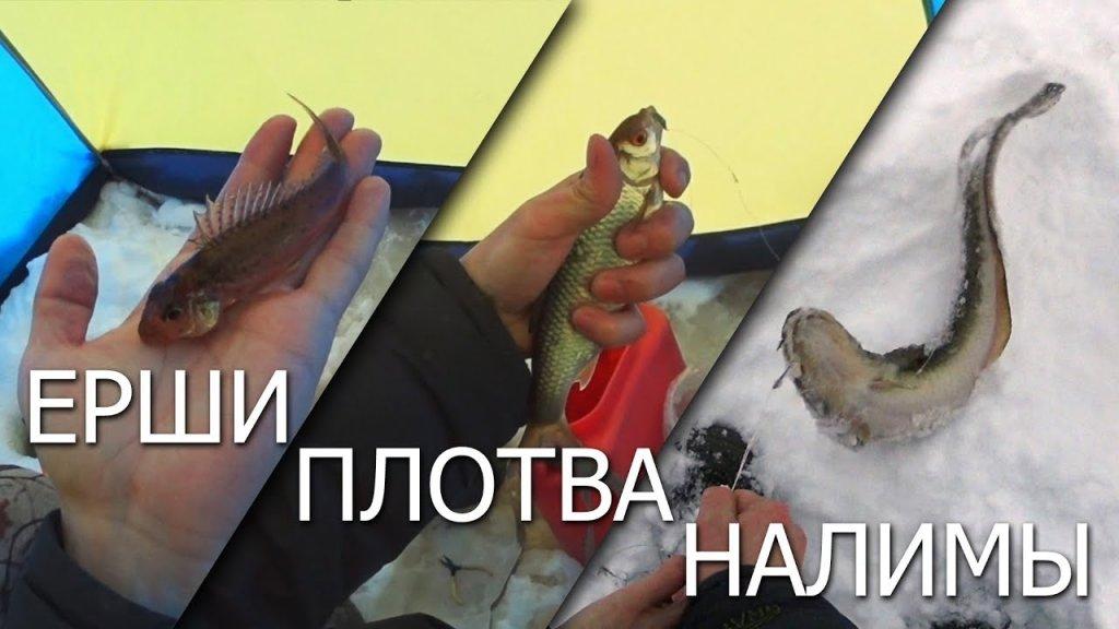Ерши / плотва / налимы / снимаем продольники