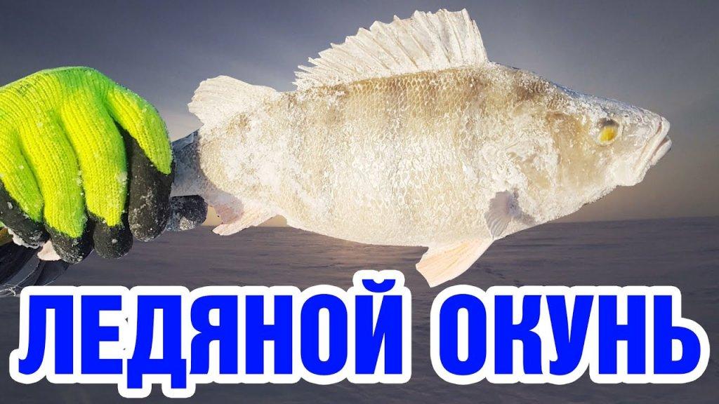 Экстремальная рыбалка на крупного окуня. Новые удильники