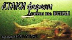 Реакция ФОРЕЛИ на приманку VIBRA, ловля на РАТТЛИН, атаки форели РЕДКИЕ кадры - усадьба УЗКОЕ