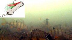 Ловля окуня зимой! Камера КАЛИПСО + МОРМЫШ! Подводная съемка