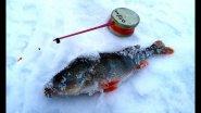 Ловля крупного окуня зимой. Тактика и места ловли.