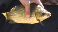 Летняя рыбалка поплавочной удочкой