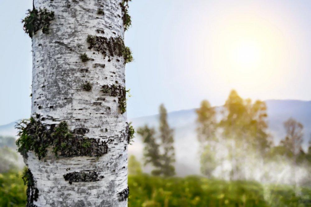 Алтай, туманное утро в горах.