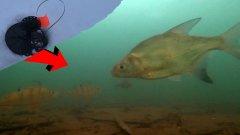 Что происходит под жерлицей в глухозимье?! Подводная съемка