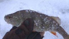 Как найти плотву зимой Как поймать зимой крупного окуня