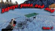 Хариус ушел под лед или чемпионат по пинг понгу