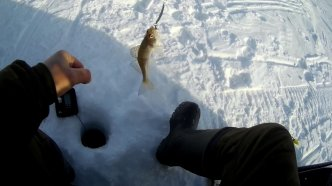 Рыбалка!!!Я офигел!!! Судак показал ЯЗЫК)))))!!!!