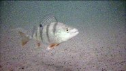 Как найти рыбу зимой на водоеме  Находим рыбу быстро и легко с помощью подводной камеры