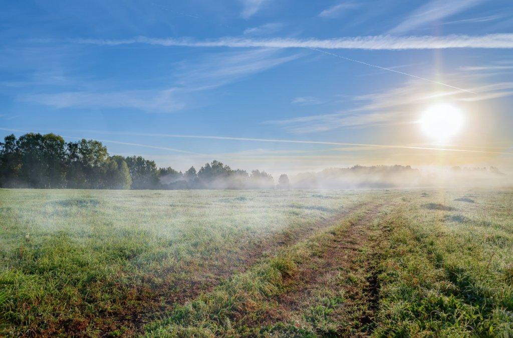 Холодное, туманное утро в поле