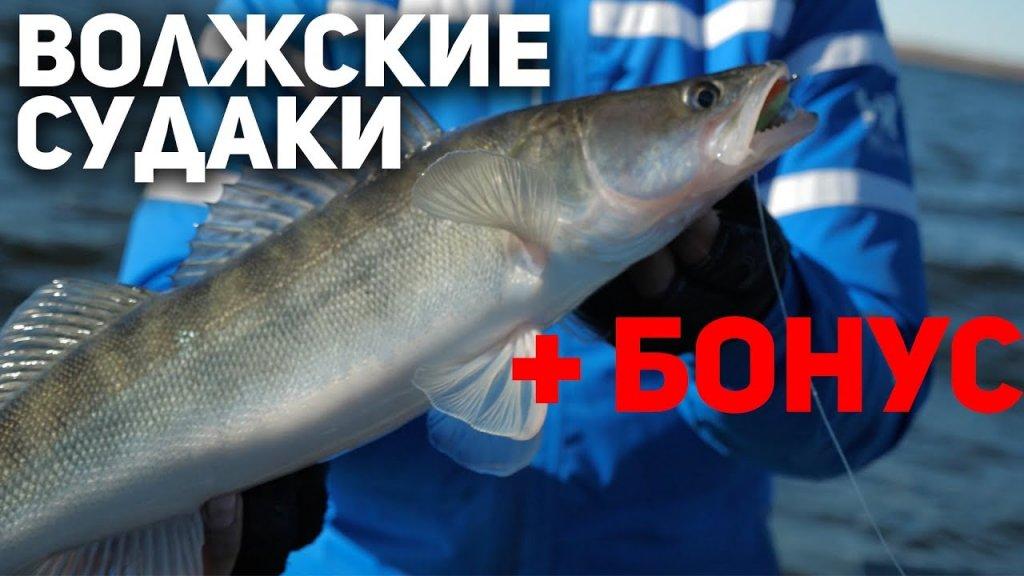 """Раздача  Волжских судаков+бонус!   """"Рыбий жЫр"""" 5 сезон выпуск 30"""