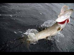 Ловля щуки на спиннинг, весенняя рыбалка