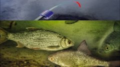 Безмотылка с камерой. Рыба кишит под лункой
