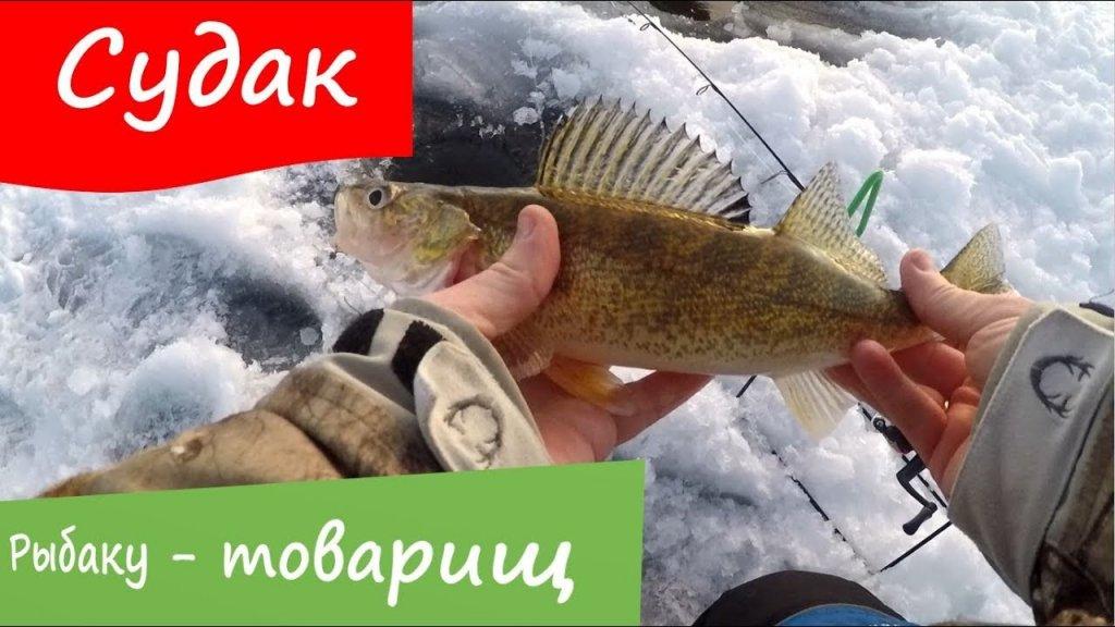 Искали сига нашли судака, отличная зимняя рыбалка