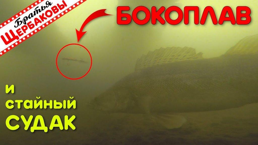 Реакция стайных судаков на бокоплав. Подводные съемки