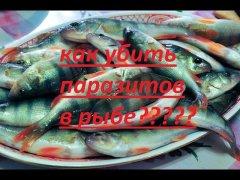 Как убить паразитов в рыбе? Основные способы
