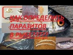 ОПАСНЫЕ паразиты в рыбе!!!какие болезни они вызывают и как их определить в рыбе???
