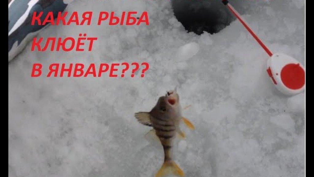 Рыбалка в сильный ветер!!!какая рыба клюёт в глухозимье
