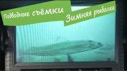 Съемки подводной камерой сиг и форель
