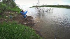 Рыбалка на севере. Ведро рыбы из под коряги.