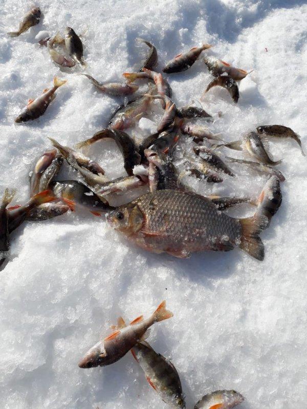 Просыпается рыбка)))))