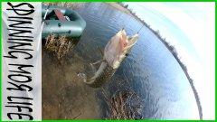 Поехали за окунем, поймали щуку и клещей. Забег по озерам Калининградской области.