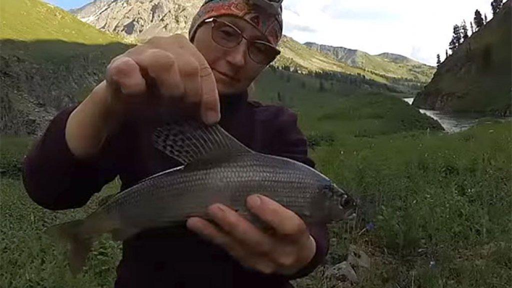 Хариус на Муху в горном озере Алтая Хорошая Рыбалка