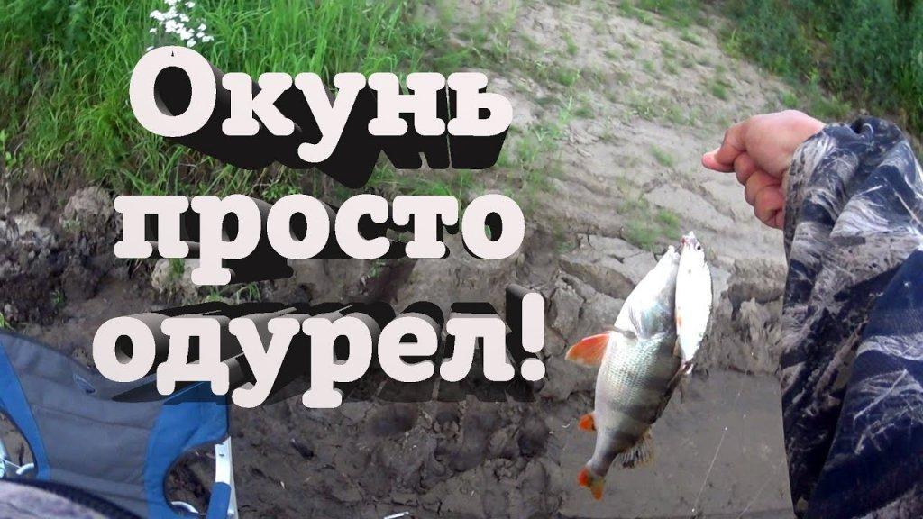 Рыбалка на фидер или лещи и окуни ломают мои удочки