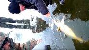 Трофей застрял в лунке. Сазана вытаскивают втроем на зимней рыбалке